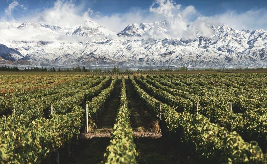 Mendoza Route 40 Road trip vineyard