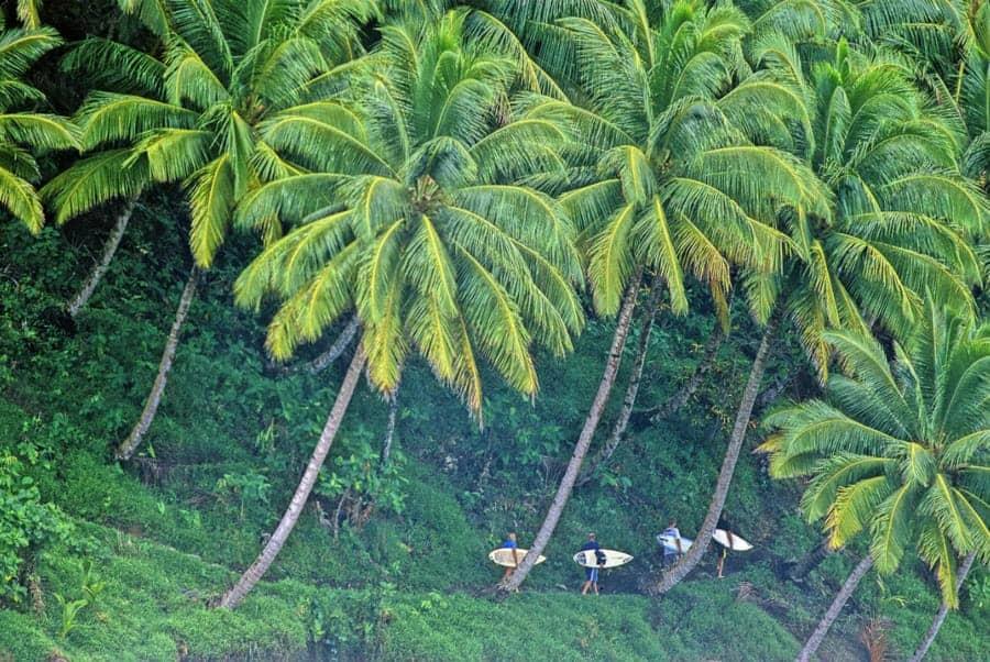 Mentawai Islands Rainforest 1