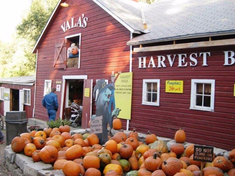 Nebraska- Vala's Pumpkin Patch