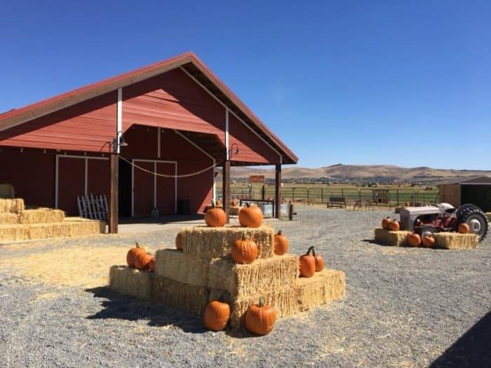 Nevada- Andelin Family Farm