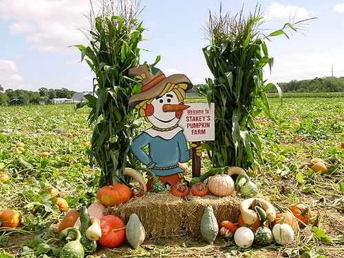 New York Stakey's Pumpkin Farm