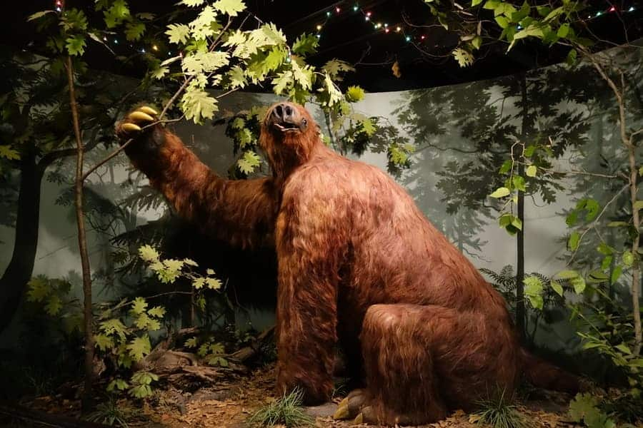 University Of Iowa Museum of Natural History guide