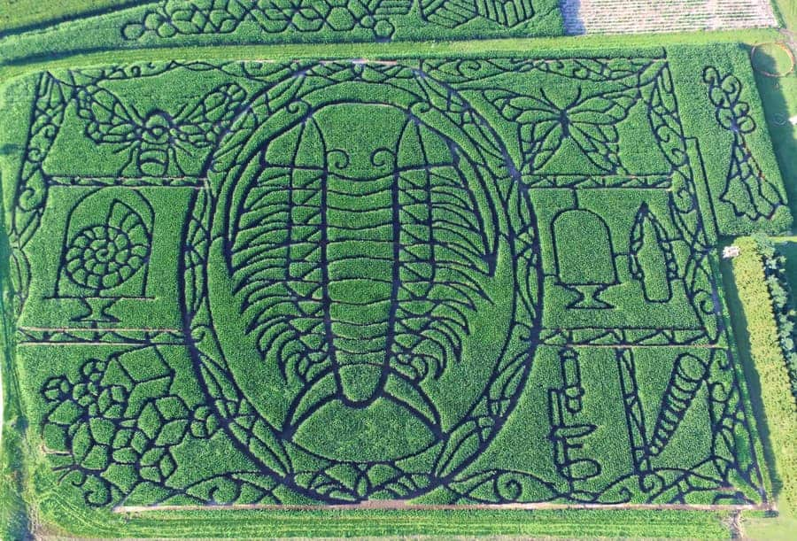 Wisconsin Treinen Farm Pumpkin Patch