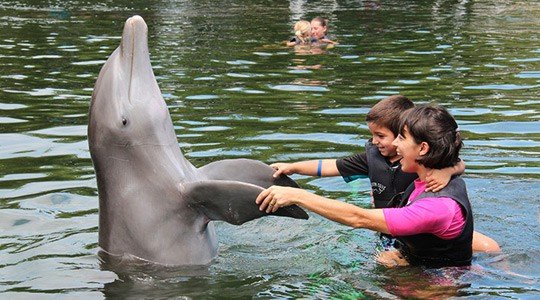 dolphin cove florida