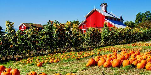 pumpkin-patch-Arkansas