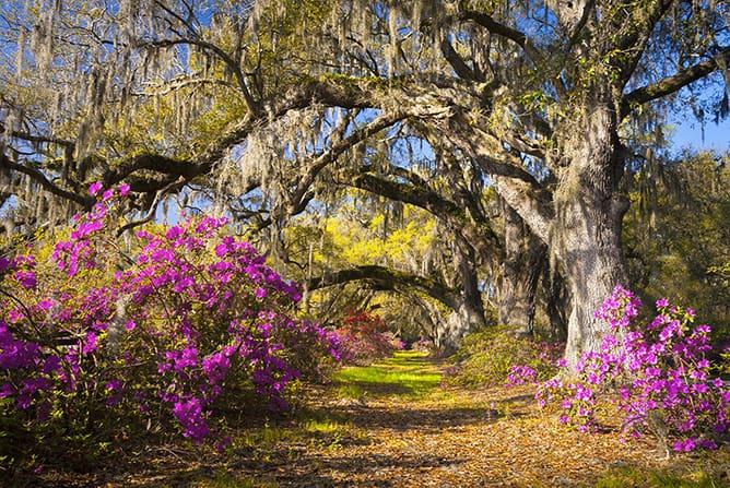 Magnolia Plantation and Gardens-Charleston