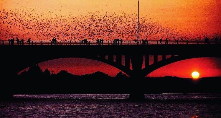 Bats congress bridge austin texas road trip