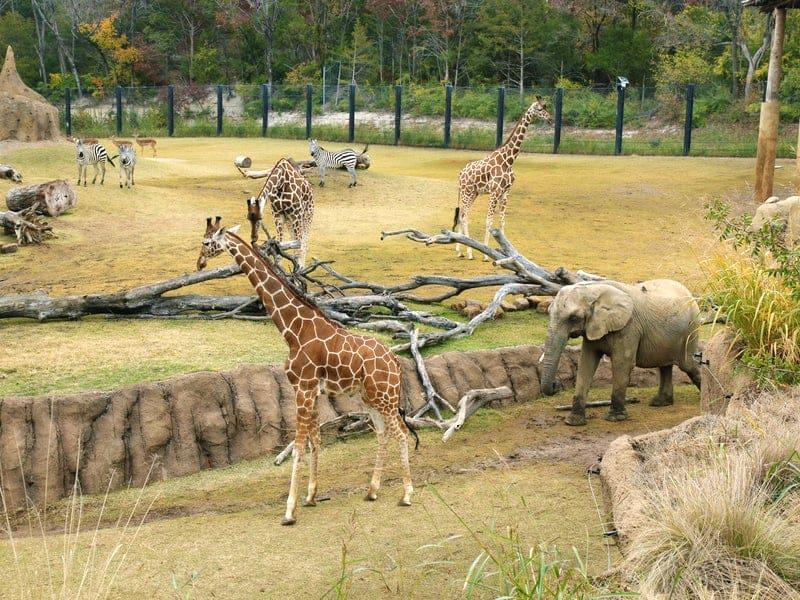 Dallas_Dallas_Zoo